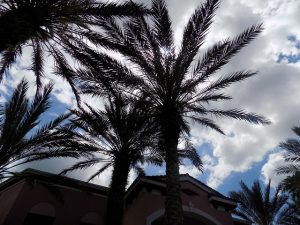 Das Wetter in Miami